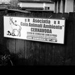 Animali: Save the Dogs